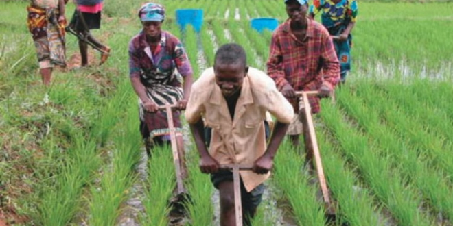 Importance Of Agricultural Sector In A Country S Economic Development